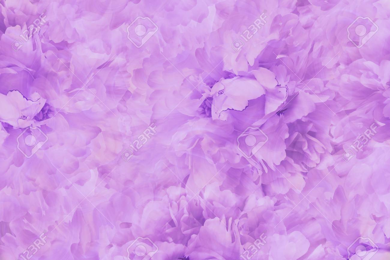 Floral Light Pink Beautiful Background Wallpapers Of Flowers