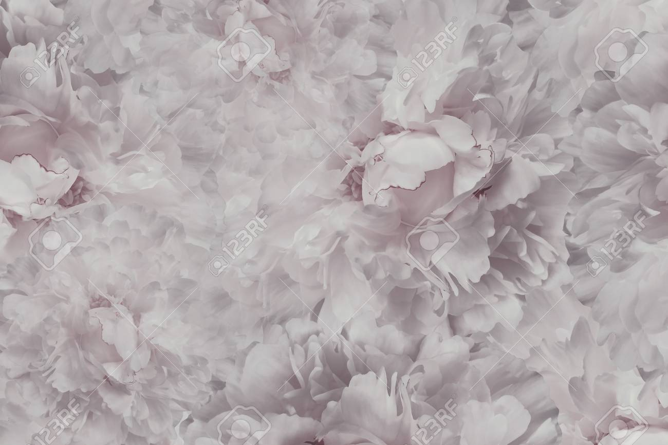 Floral Light Pink White Beautiful Background Wallpapers Of Stock Photo Picture And Royalty Free Image Image 88138966