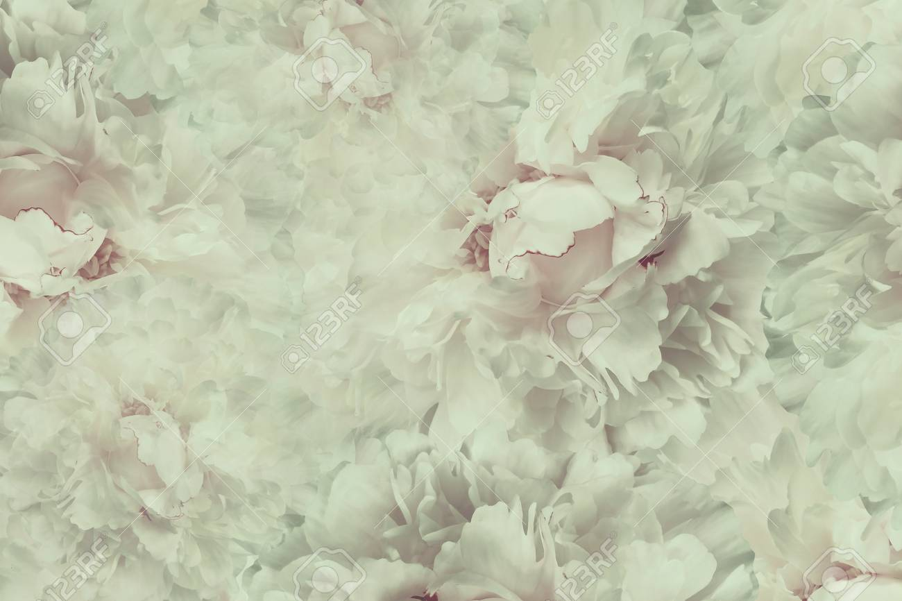 Floral Vintage Beautiful Background Wallpapers Of Flowers Light