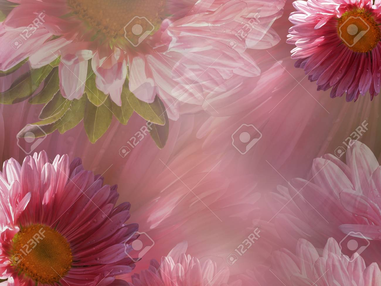 Floral pink white beautiful background of daisy wallpapers of floral pink white beautiful background of daisy wallpapers of flowers pink white chamomile izmirmasajfo Choice Image