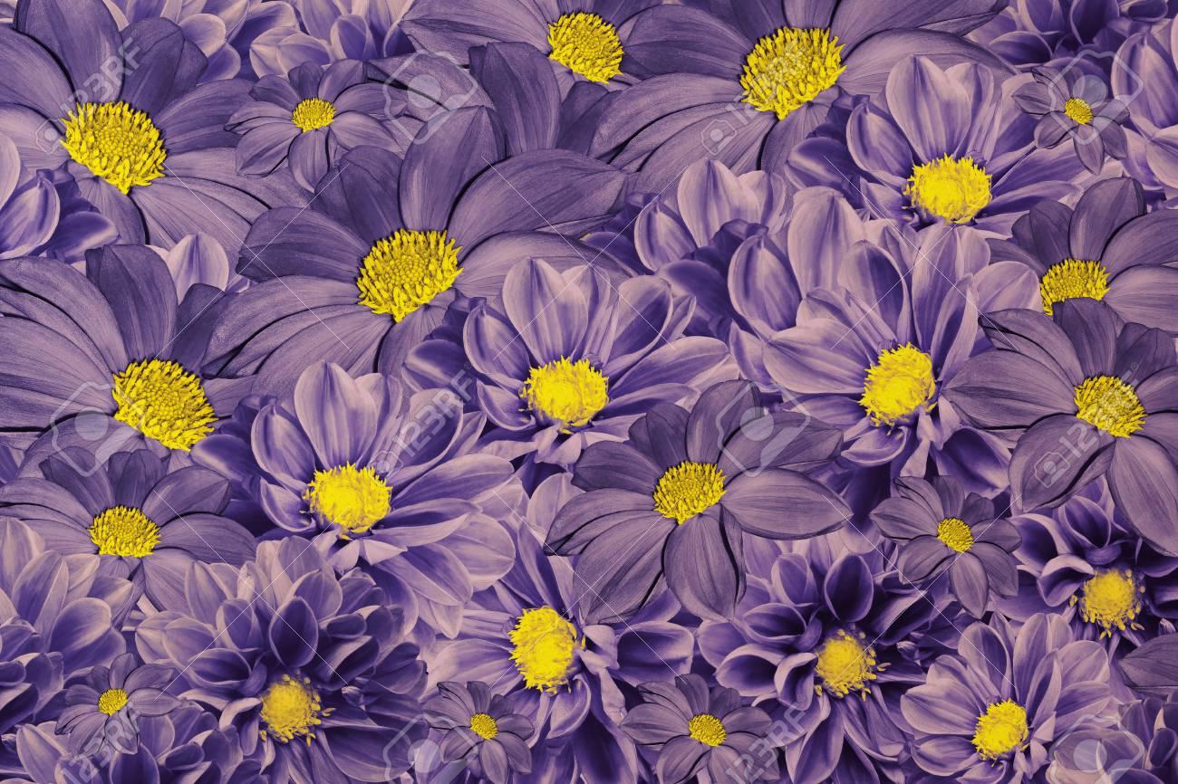 Floral violet background of dahlias bright flower arrangement floral violet background of dahlias bright flower arrangement a bouquet of purple yellow izmirmasajfo