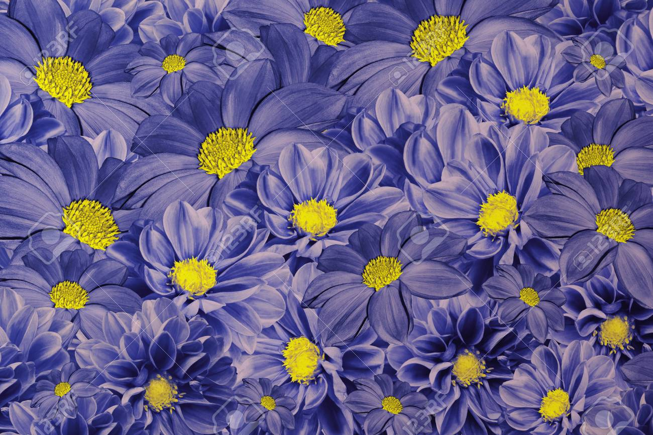 Floral Blue Background Of Dahlias Bright Flower Arrangement Stock Photo Picture And Royalty Free Image Image 89982827