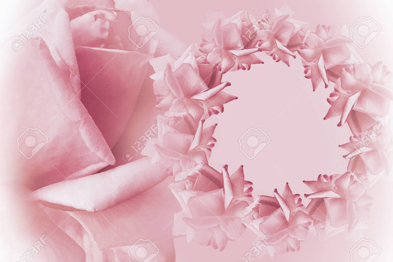 Floral Pink White Beautiful Background. Flower Composition. Frame Of Pink  Flowers Roses On