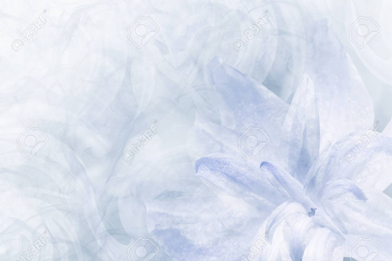 Floral abstract light blue white background petals of a lily floral abstract light blue white background petals of a lily flower on a white izmirmasajfo