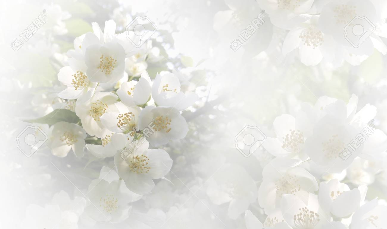 Soft Light Pink Floral Background Flowers Of A Cherry On A Stock