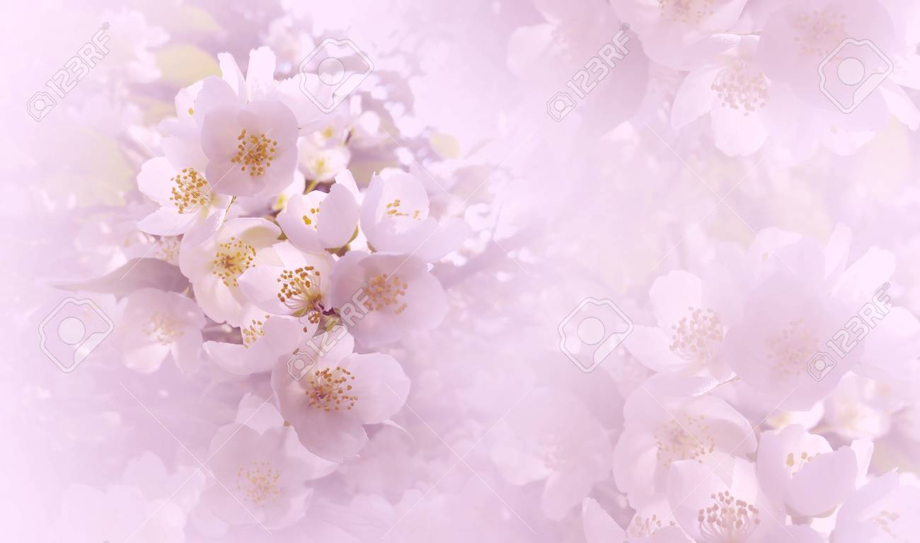 Soft Light Pink Floral Background Flowers Of A Cherry On A