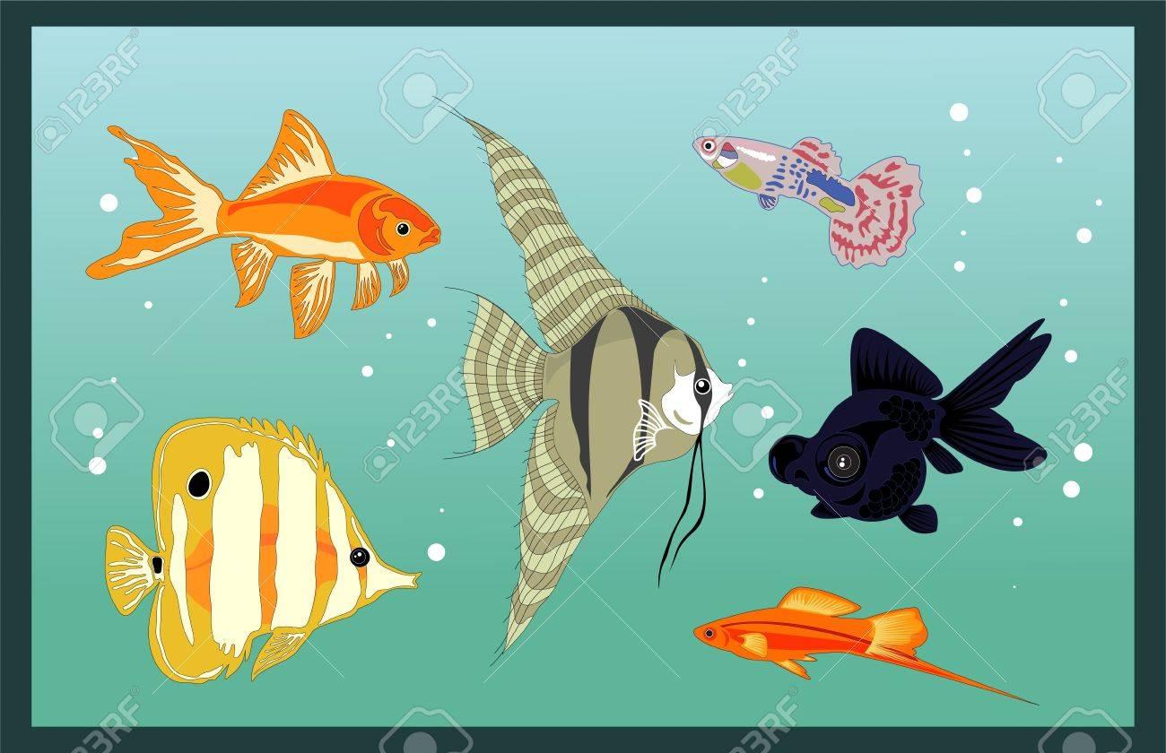 aquarium fishes Stock Vector - 10070608