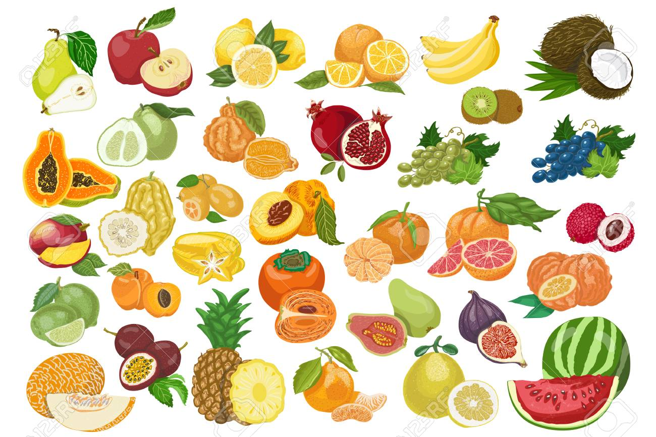 Big collection of isolated fruits. Vector illustration for your design - 122749504