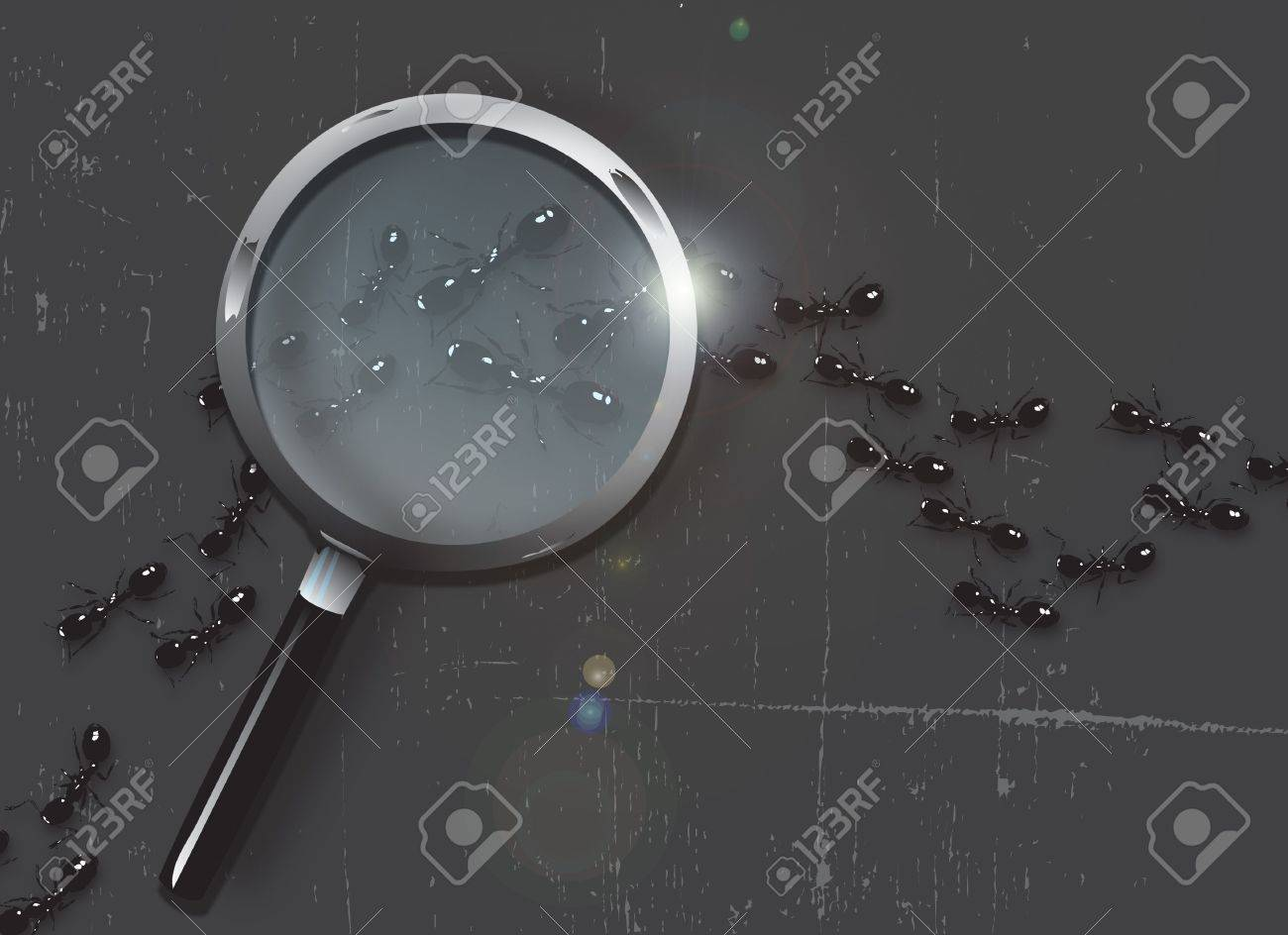 A trail of black ants on a slate grey grunge style background. A magnifying glass hovers over the ants. Stock Photo - 6030659