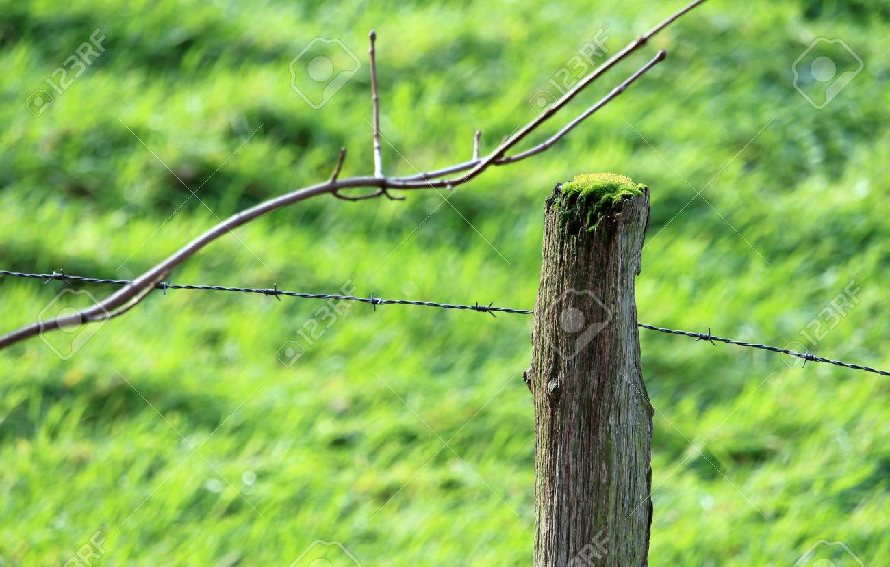 Barbed Wire Fence At The Pasture Stock Photo, Picture And Royalty ...