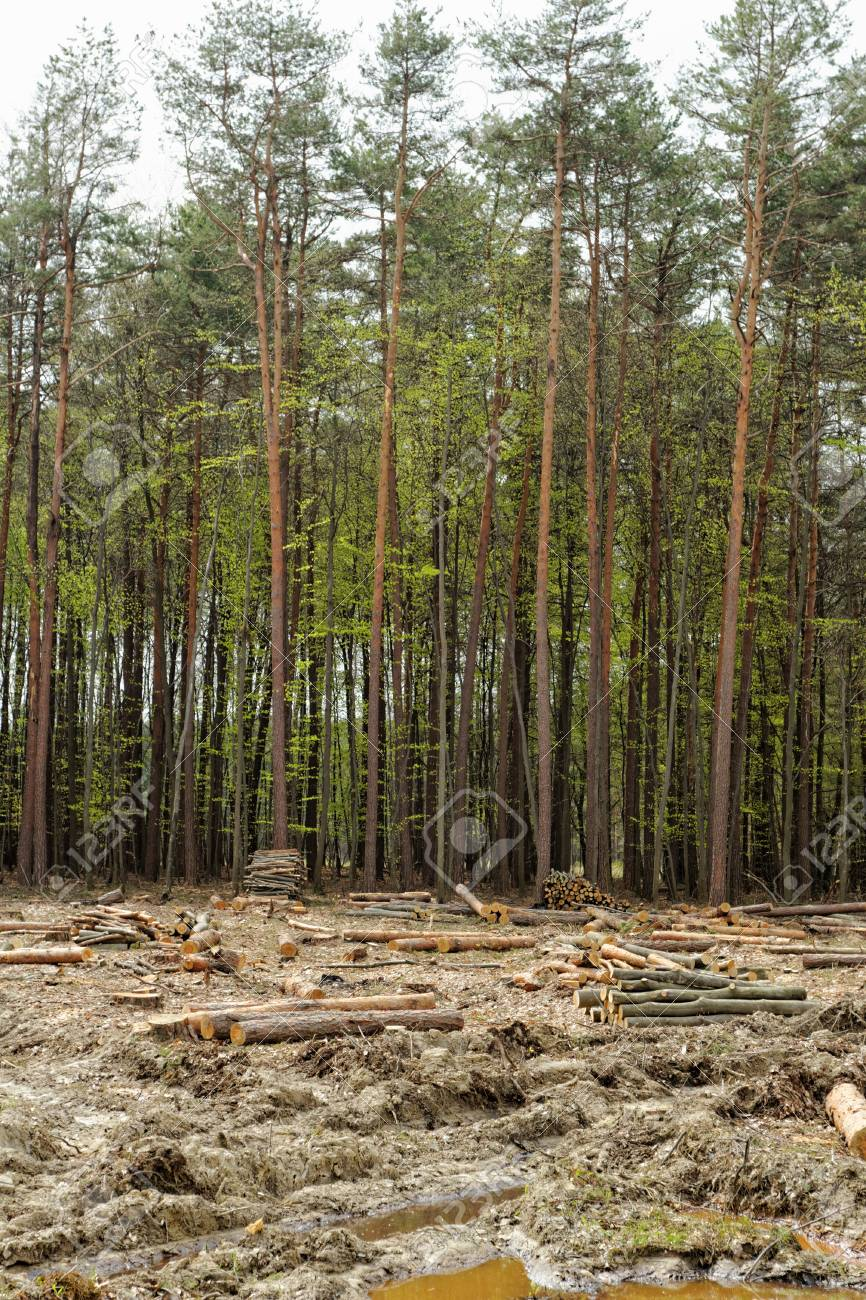 industrial deforestation and logging Stock Photo - 22956947