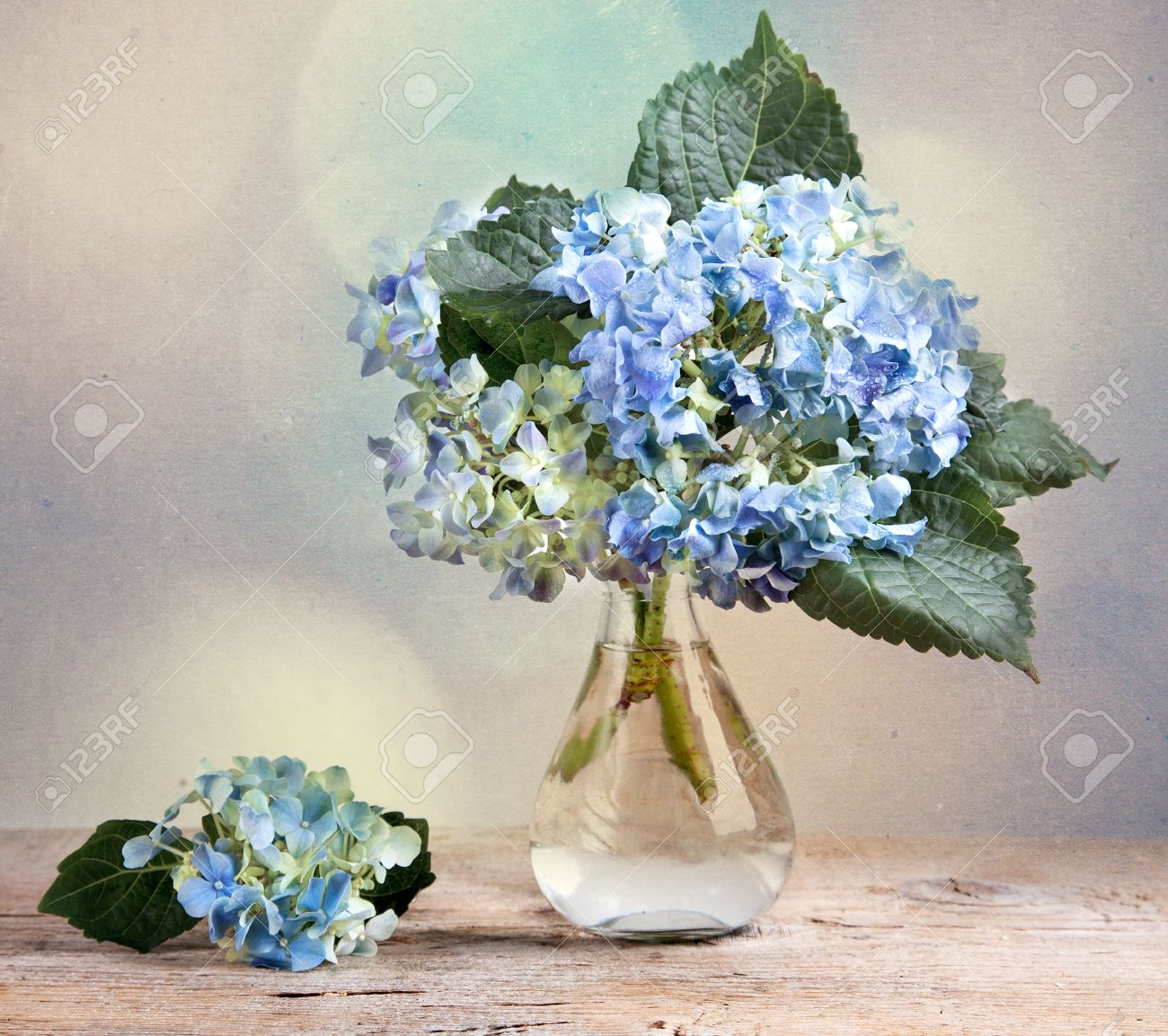 Still life with blue hortensia flowers in glass vase stock photo still life with blue hortensia flowers in glass vase stock photo 9419608 reviewsmspy