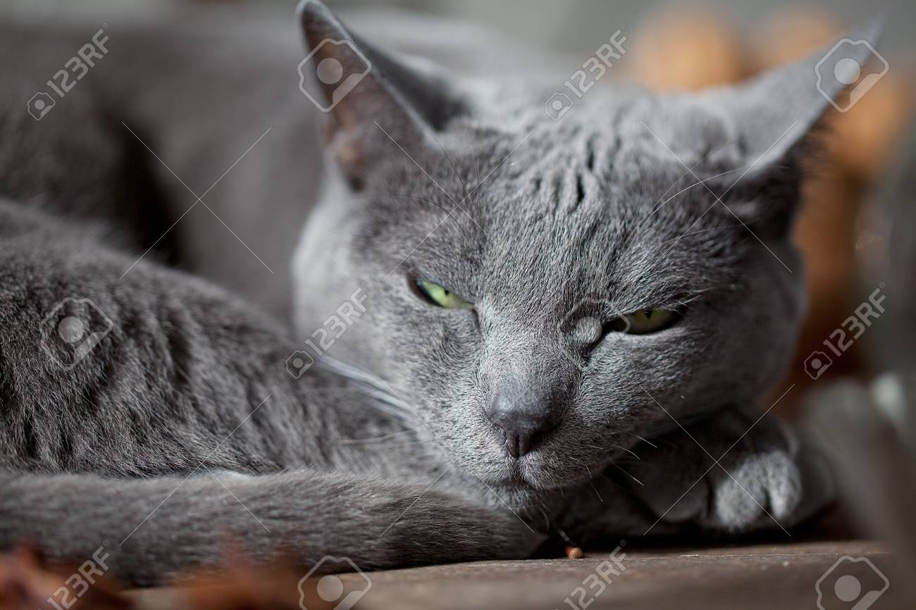 Cat lying on kitchen table with different spices and utensils Stock Photo - 10903228