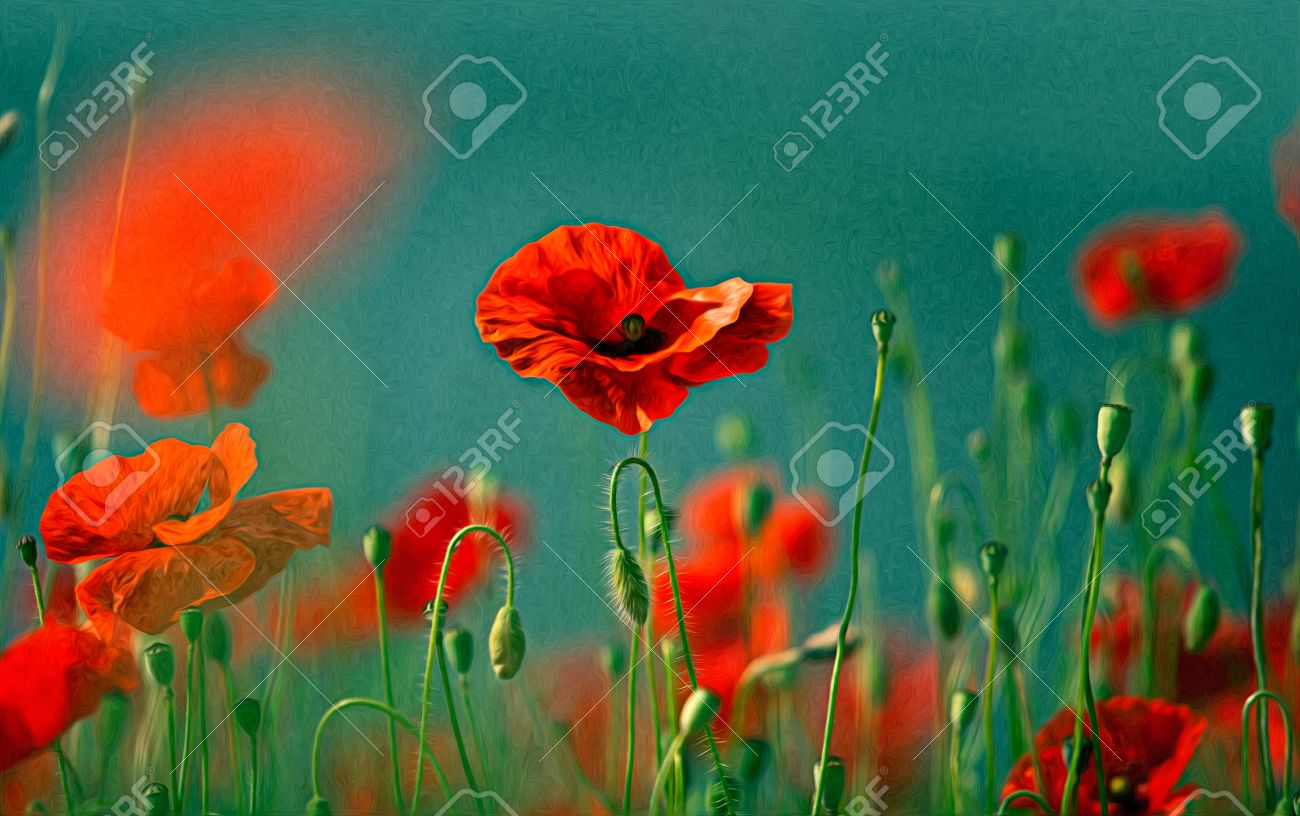 illustration of red poppy flowers in oil painting style stock