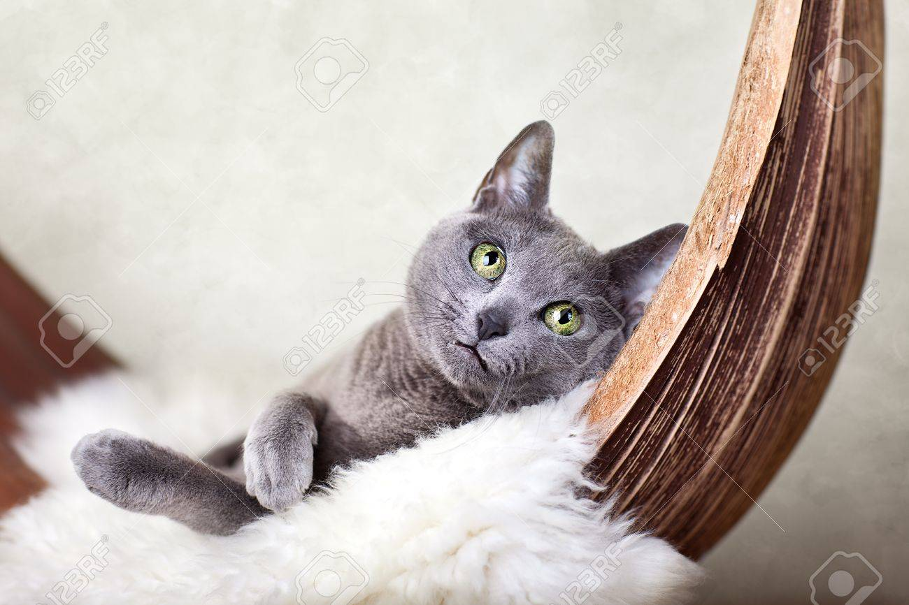 Cat relaxing on lambskin, in palm leaf bed. Stock Photo - 12138001