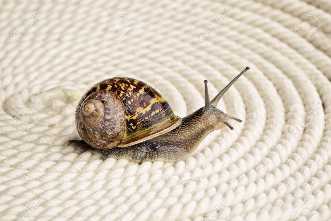 Snail crawling on table, looking around curiously Stock Photo - 24715584