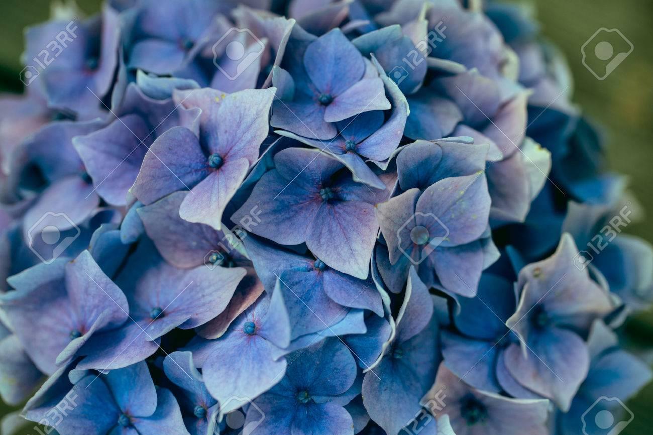 Bodegon Con Azul Pastel Color Hortensia Flores En Lata Fotos - Color-hortensia