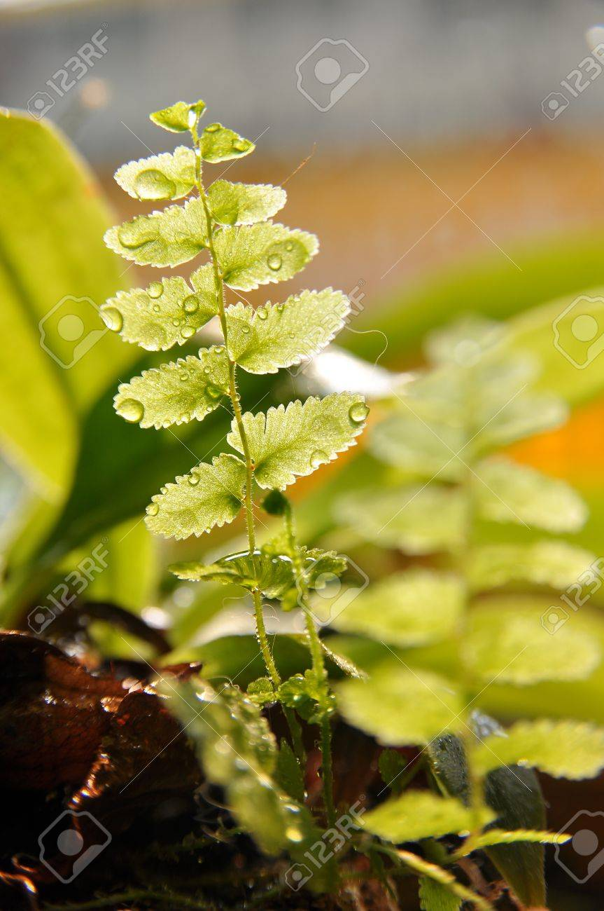 fern Stock Photo - 12035811
