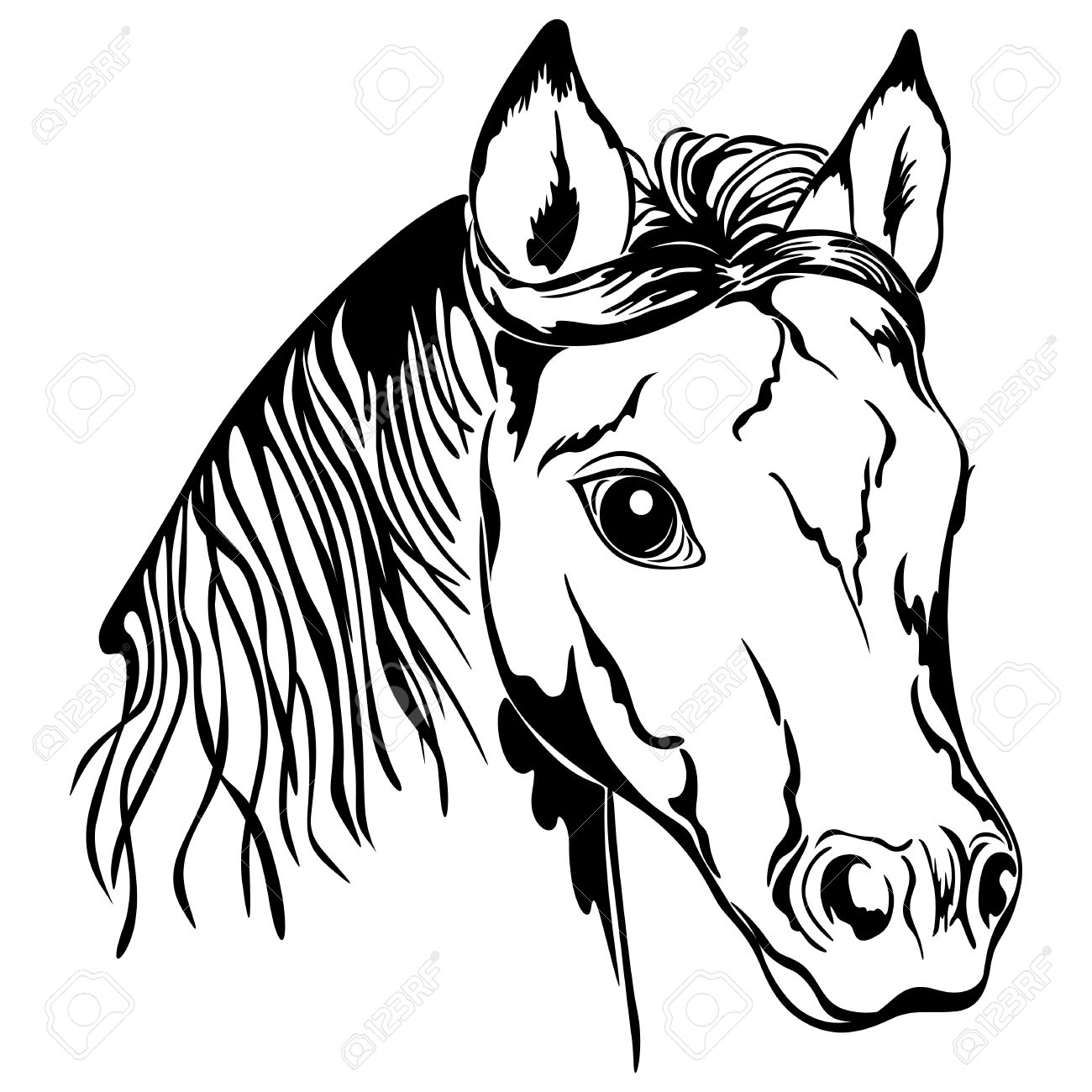 Outline Of Horse Head Black And White Royalty Free Cliparts Vectors And Stock Illustration Image 18498231