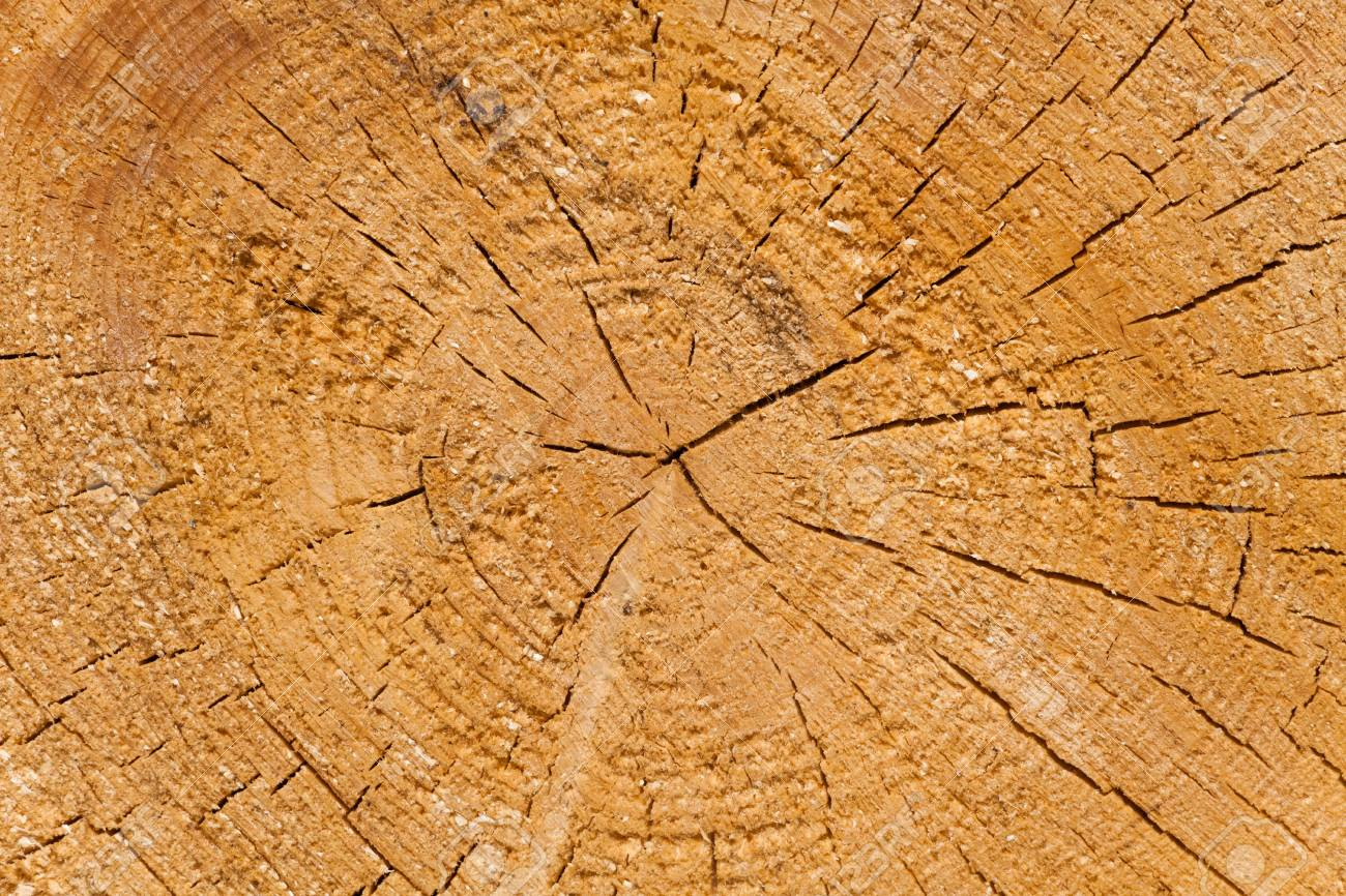 Dendrochronology Stock Photo Picture And Royalty Free Image