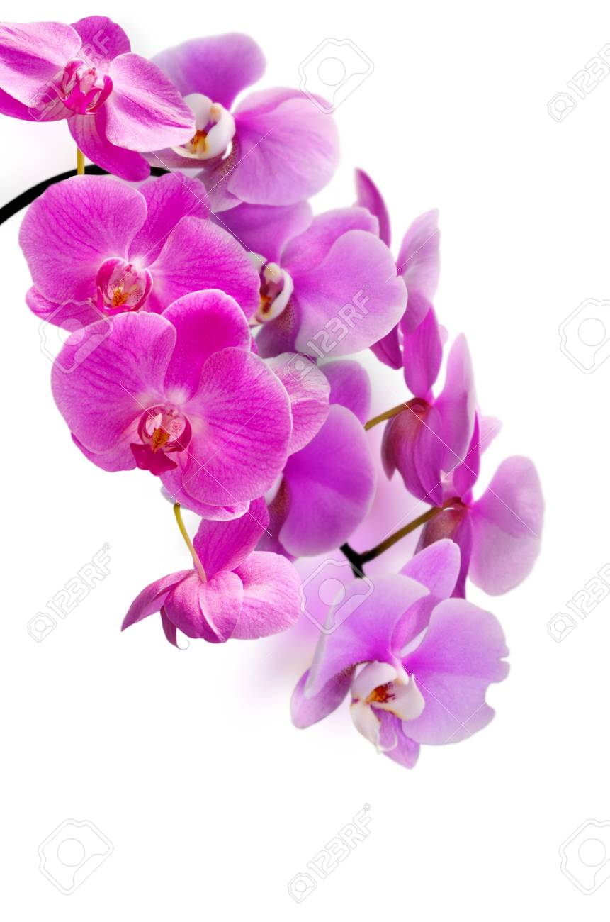 beautiful purple orchid flower Stock Photo - 20336890