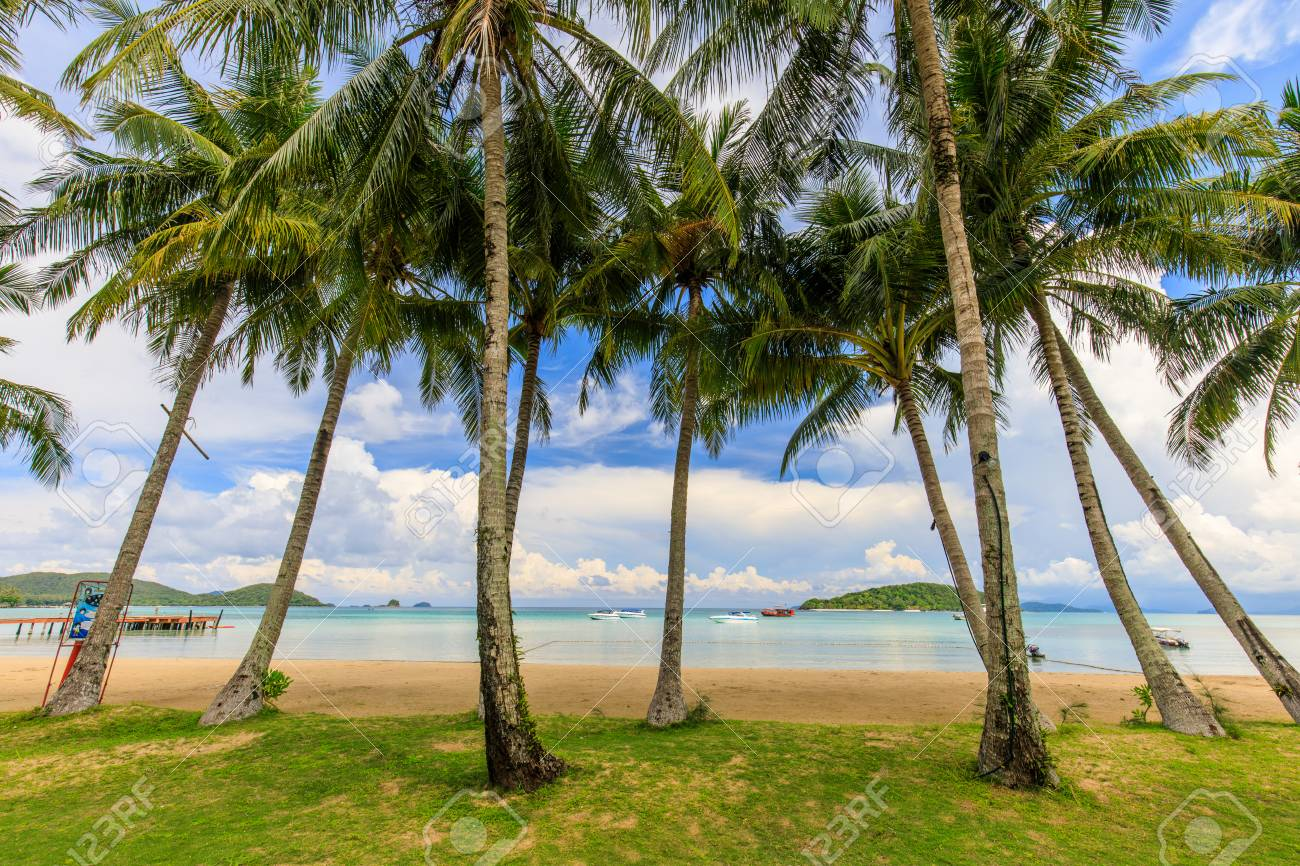 Coconut on the tropical beach in Koh Mak island, Trat province,Thailand - 106342792