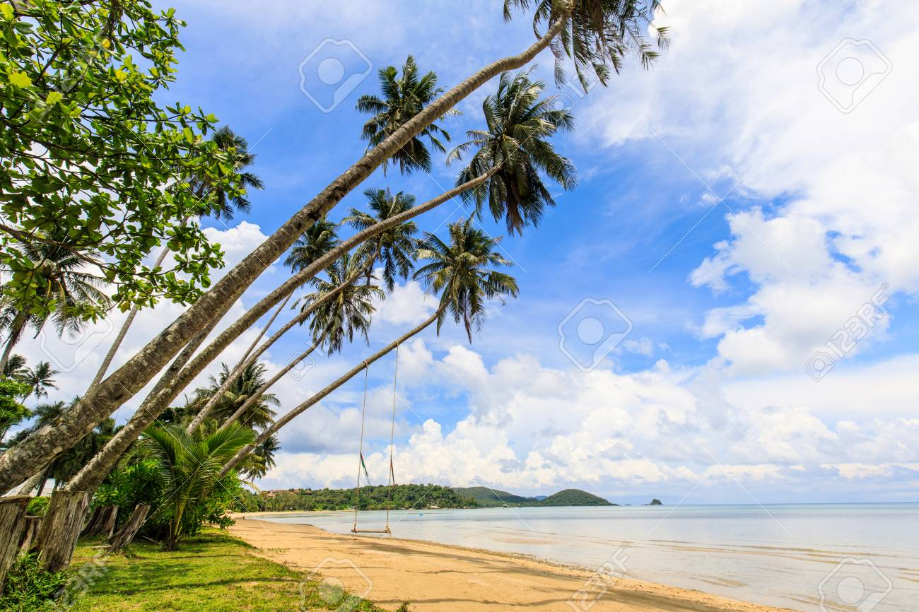 Coconut on the tropical beach in Koh Mak island, Trat province,Thailand - 106342867