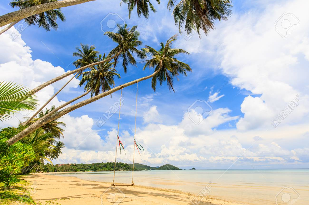 Coconut on the tropical beach in Koh Mak island, Trat province,Thailand - 106342868