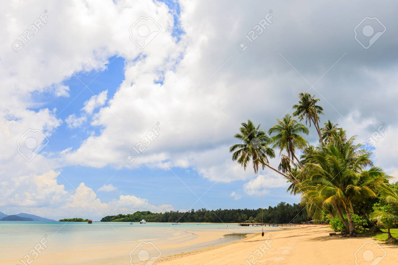 Coconut on the tropical beach in Koh Mak island, Trat province,Thailand - 106342872