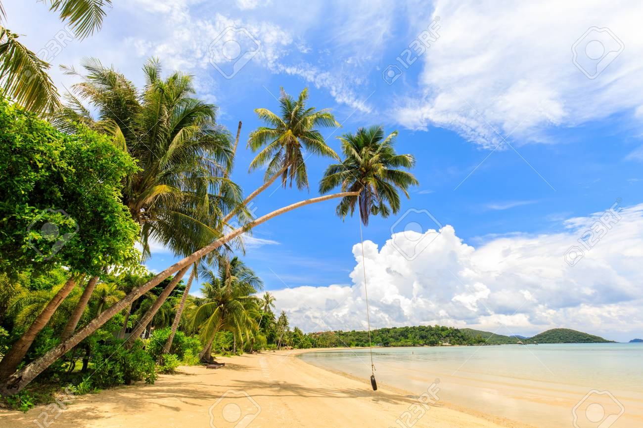 Coconut on the tropical beach in Koh Mak island, Trat province,Thailand - 106342873