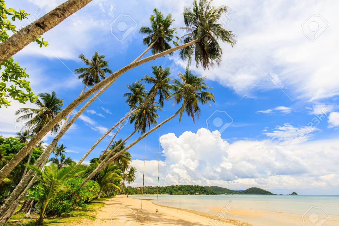 Coconut on the tropical beach in Koh Mak island, Trat province,Thailand - 106342874