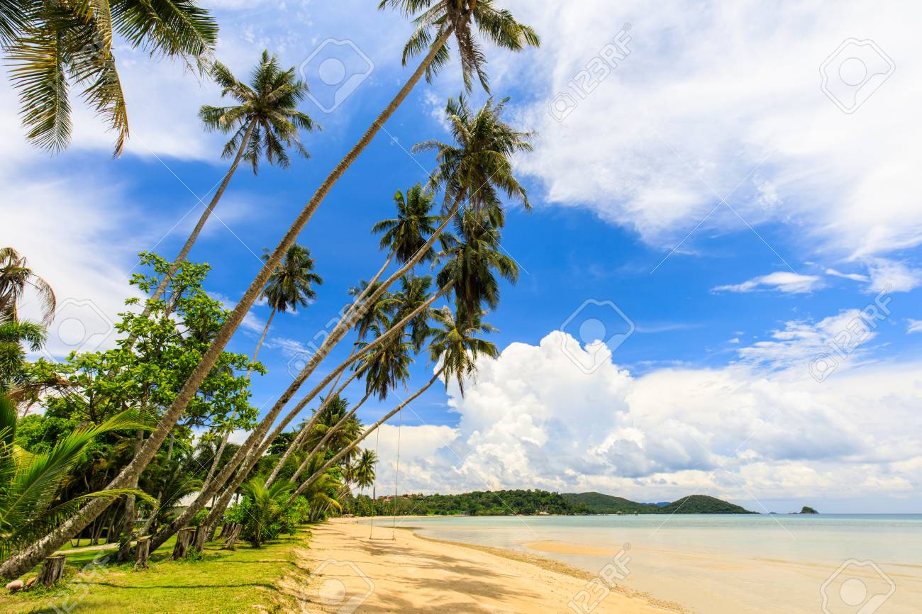 Coconut on the tropical beach in Koh Mak island, Trat province,Thailand - 106342875
