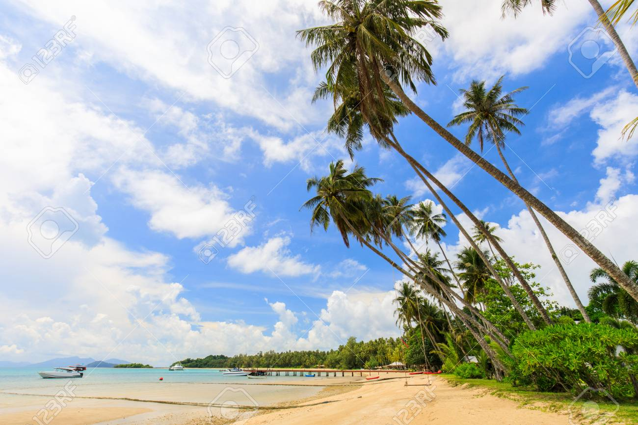 Coconut on the tropical beach in Koh Mak island, Trat province,Thailand - 106342876