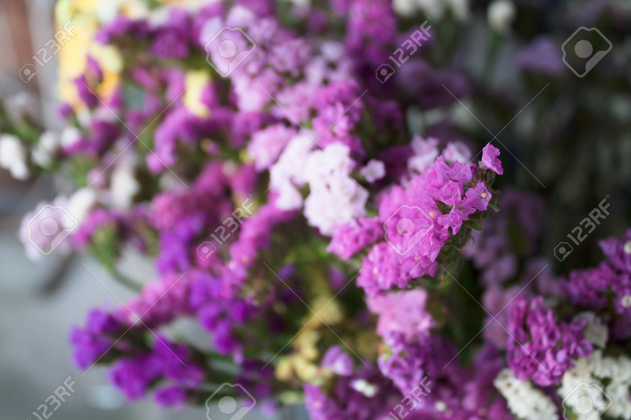Focus Fresh Purple Statice Flowers Stock Photo Picture And Royalty