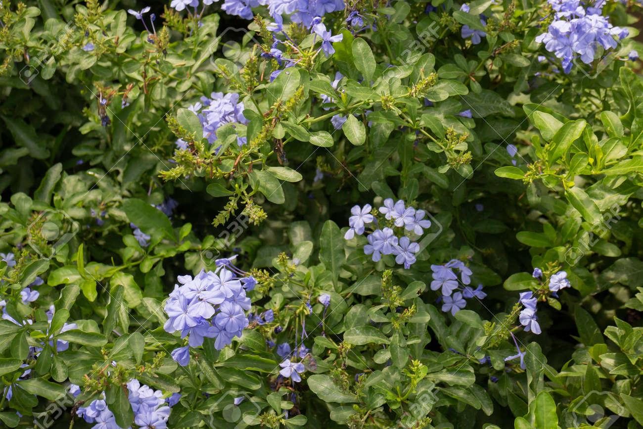 Hanging flower plant pot in garden, stock photo - 168400218