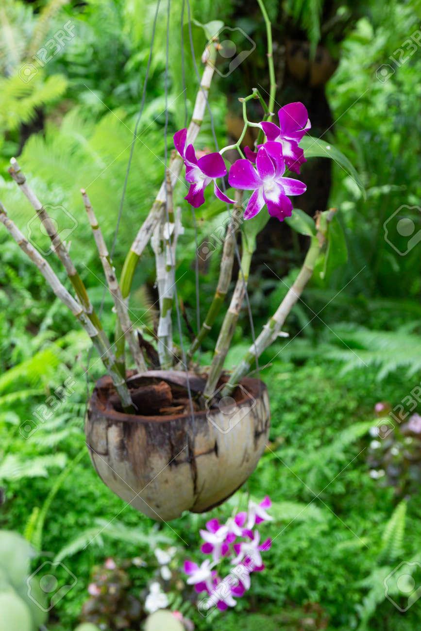 Hanging flower plant pot in garden, stock photo - 168400209