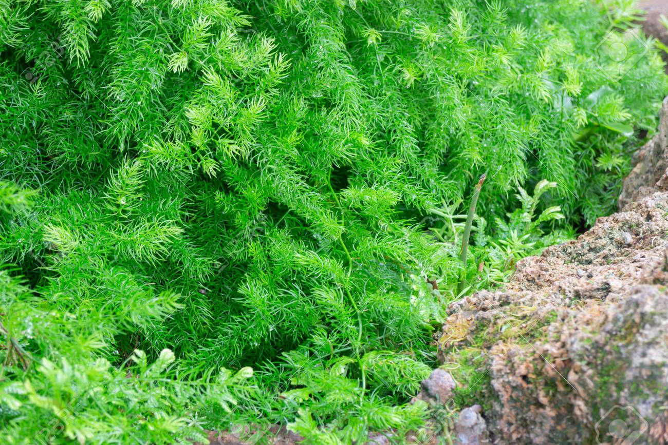 Tropical green surroundings in outdoor garden, stock photo - 168400211