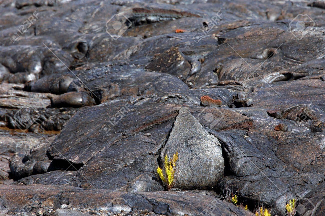 Hawaii Volcanoes National Park on the Big Island of Hawaii continues