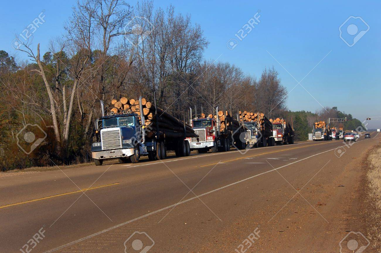Seven eighteen wheelers are lined up on the shoulder of the highway waiting their turn for weight in All have loads of cut timber ready for the paper mill - 14922637