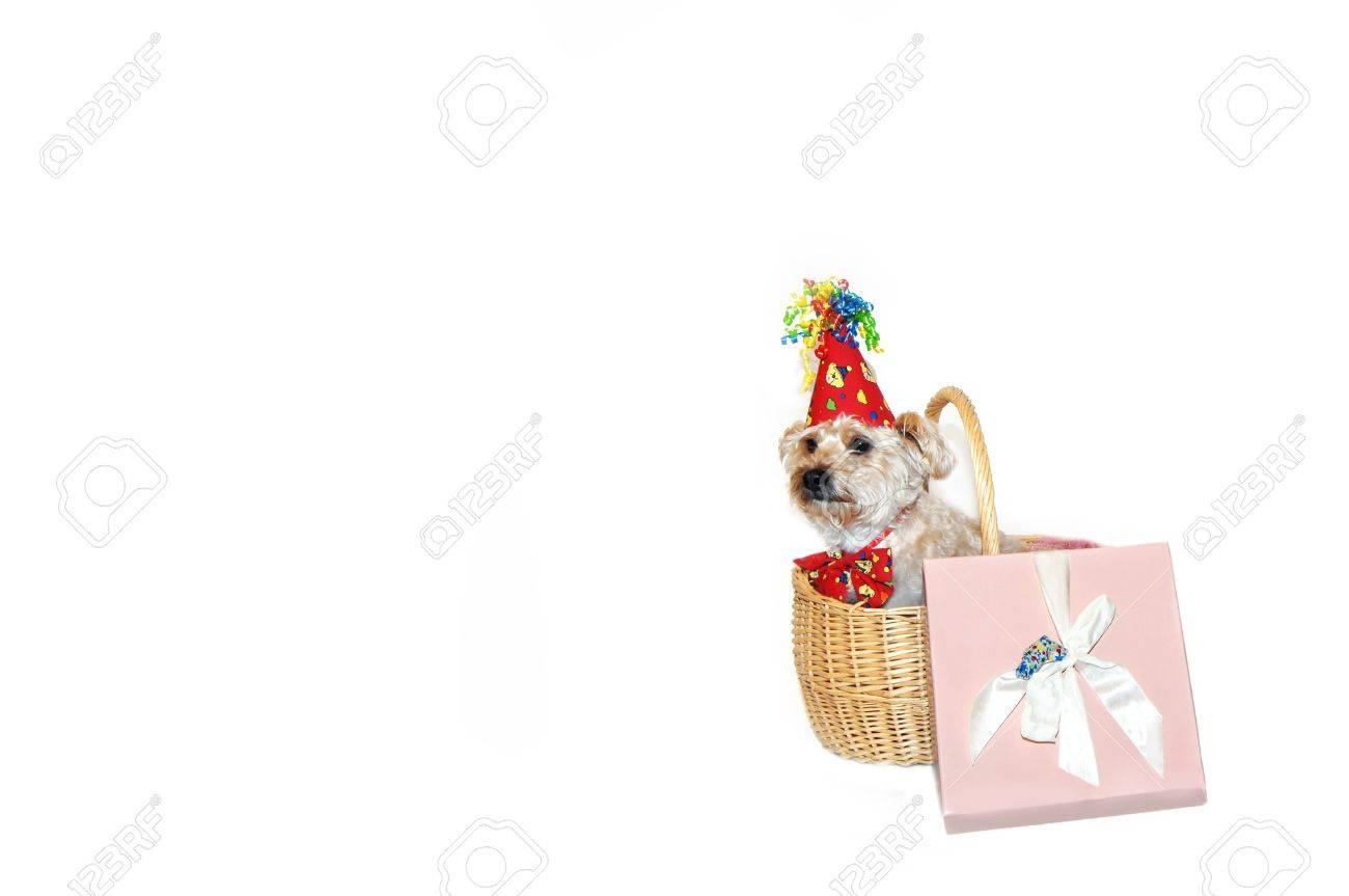 Gefeliciteerd Met Je Verjaardag Hond Zit In Een Geschenk Mand Naast