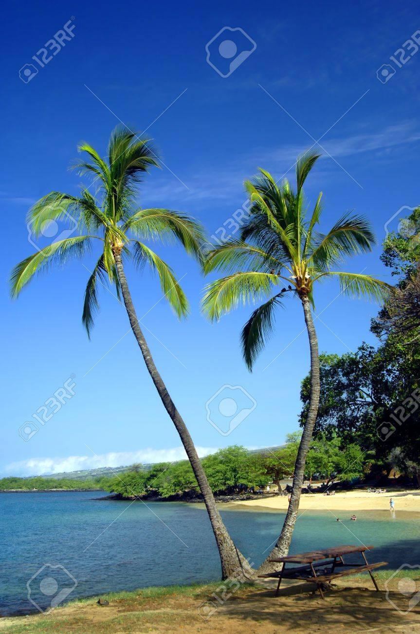 Vivid Blue Skies Rahmen Zwei Split-Palmen Auf Einem Strand Auf Der ...