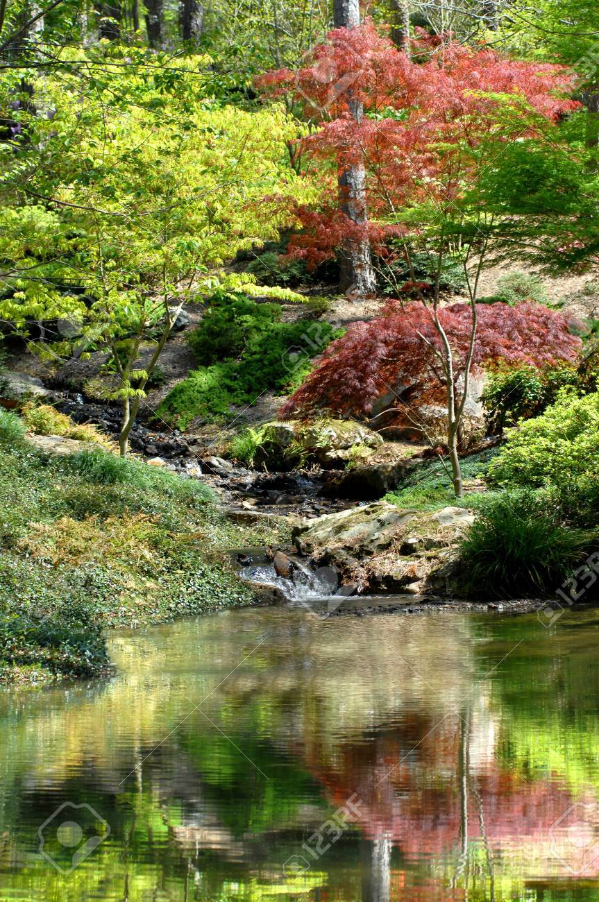 Acero Giapponese Verde bellissimo giardino ha piscina serenità custodito da una superficie verde  acero giapponese glassy ha increspature dolci della cascata e il riflesso