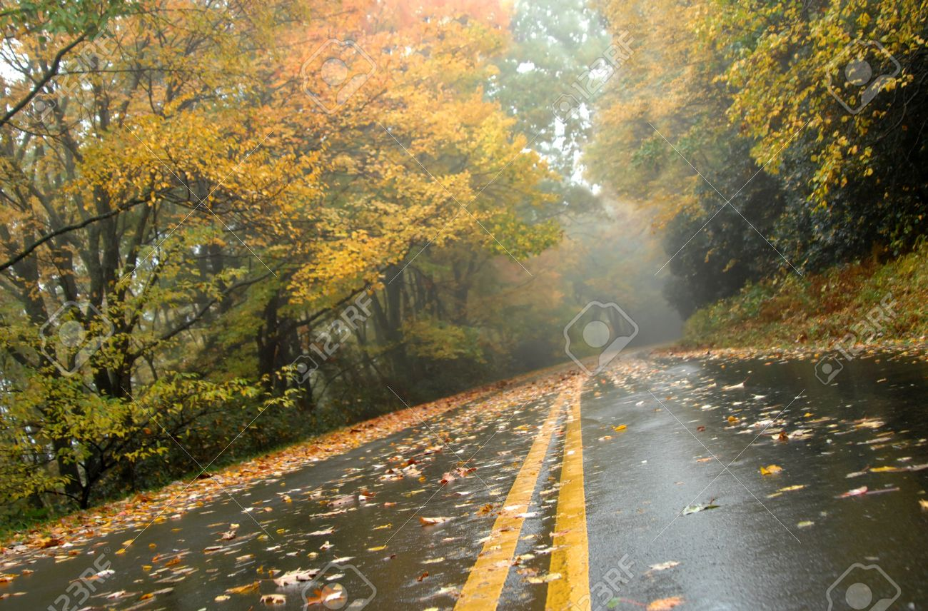 Autumn colors wet road of the Blue Ridge Parkway with gold Road runs through Asheville, North Carolina - 15104574