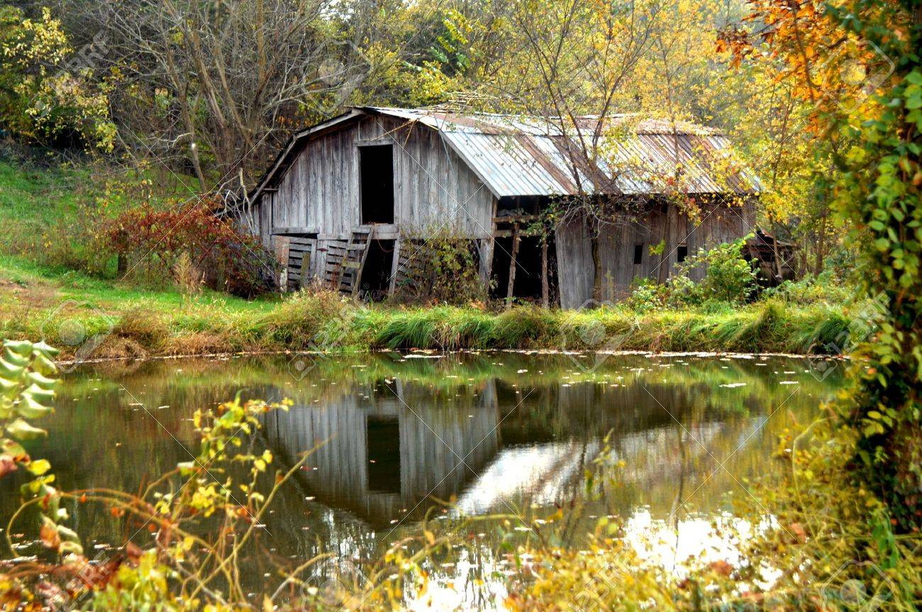 Abandoned wooden barn is reflected in a pond Autumn foliage surrounds pool and barn with gold Weathered wood and tin roof are cracked and in need of repair - 16318606