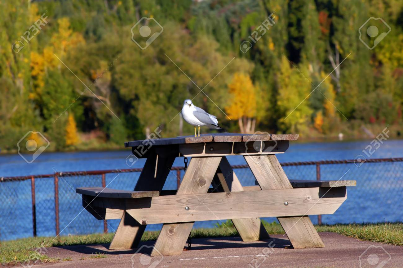 Single Sea Gull Sits On Top Of A Picnic Table At The Harbor Front - Picnic table michigan