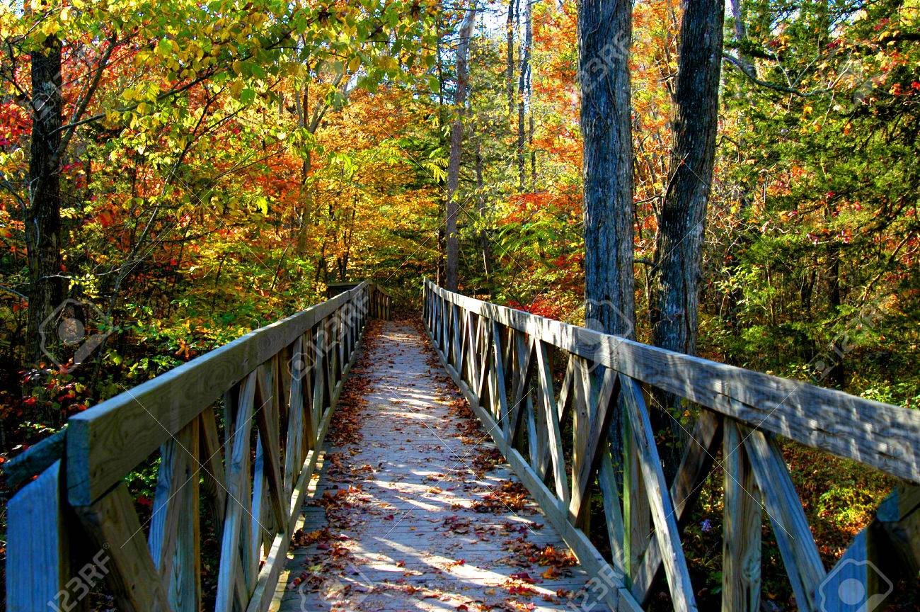Rustic, wooden bridge beckons exploring on a sunny morning in Autumn. Location is North Arkansas. - 68798522