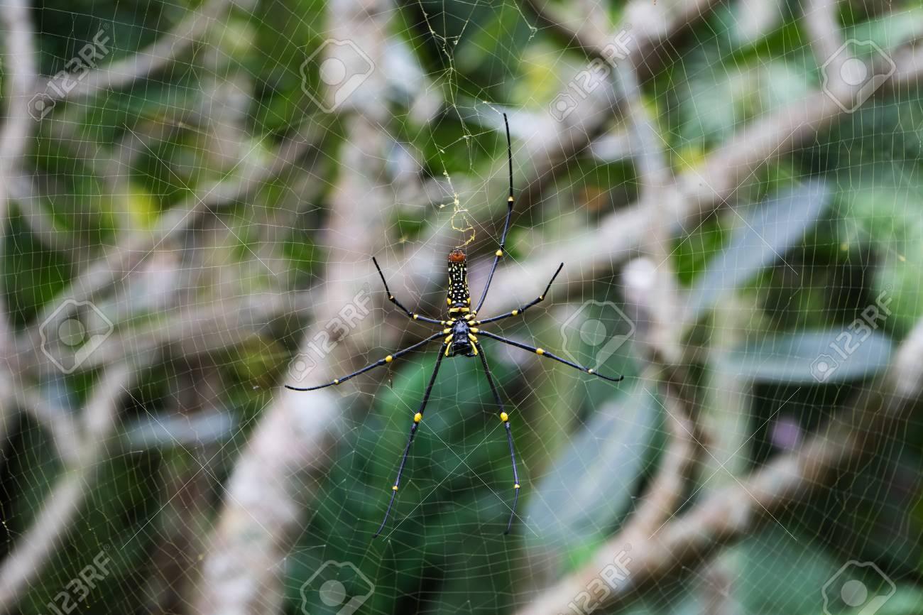 Spider on spider web Standard-Bild - 91590570