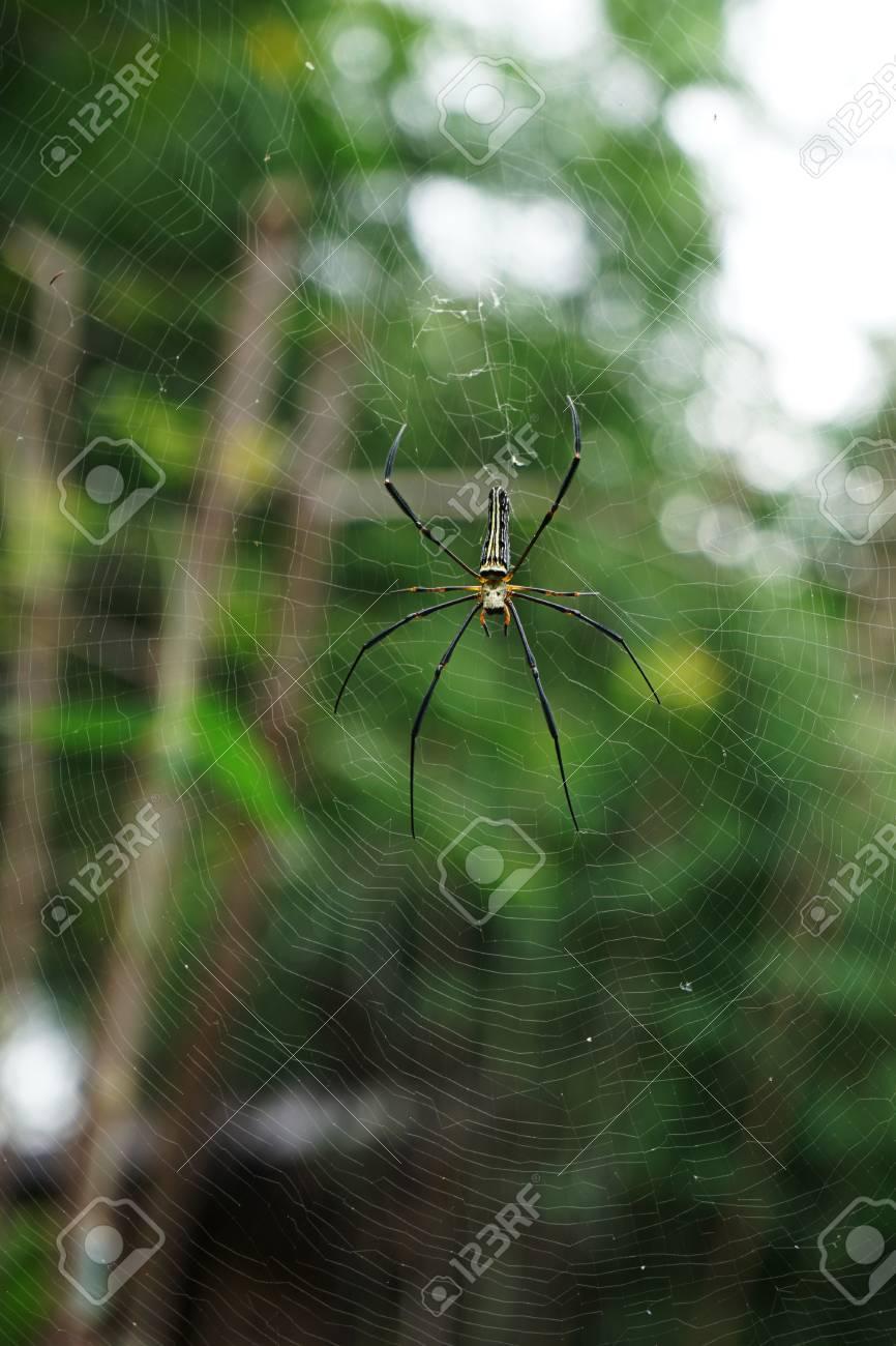 Spider on spider web Standard-Bild - 91479374