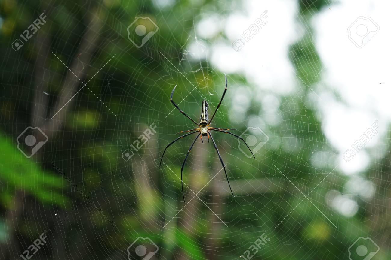 Spider on spider web Standard-Bild - 91528706