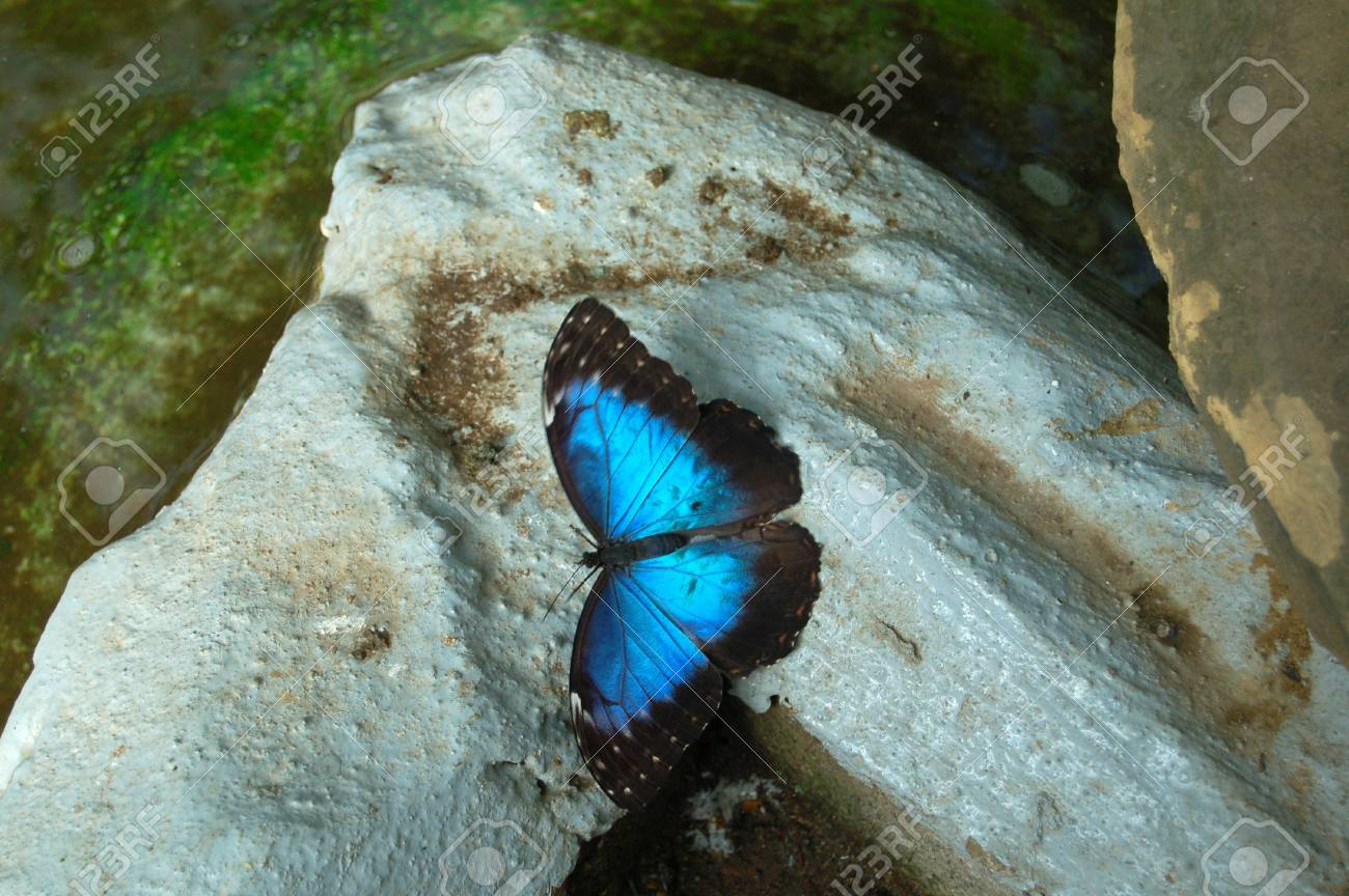 Butterfly Stock Photo - 9992962
